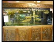 Bể cá gỗ de,BC07