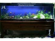 bể cá gỗ gụ  BC11