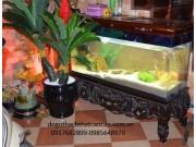 bể cá gỗ gụ khảm BC13